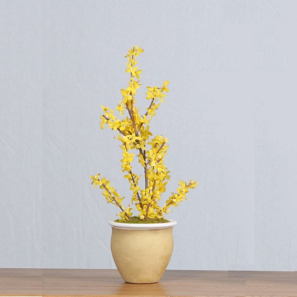 Жълт зимен жасмин