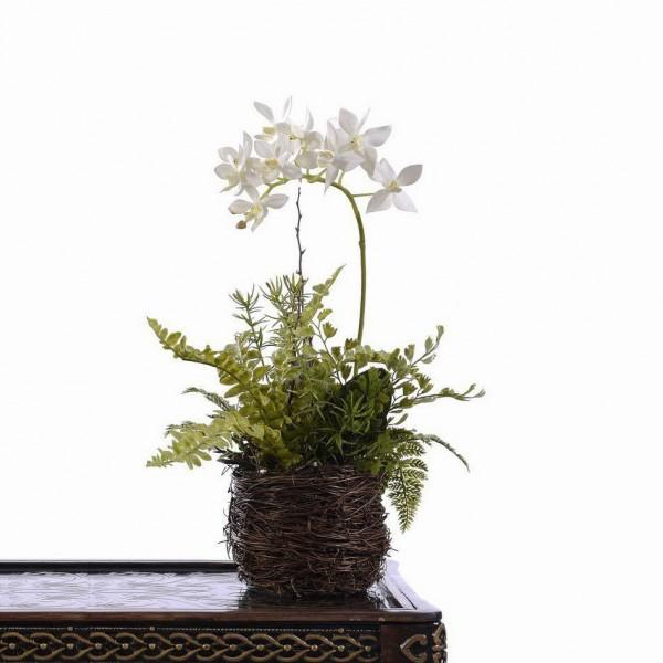 Бяла орхидея