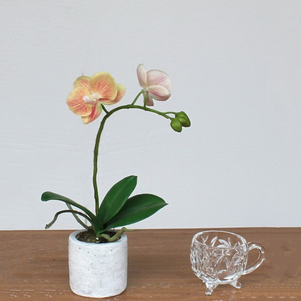 Жълто-розова орхидея