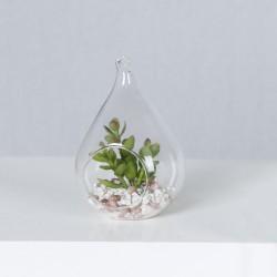 Сукулентни цветя